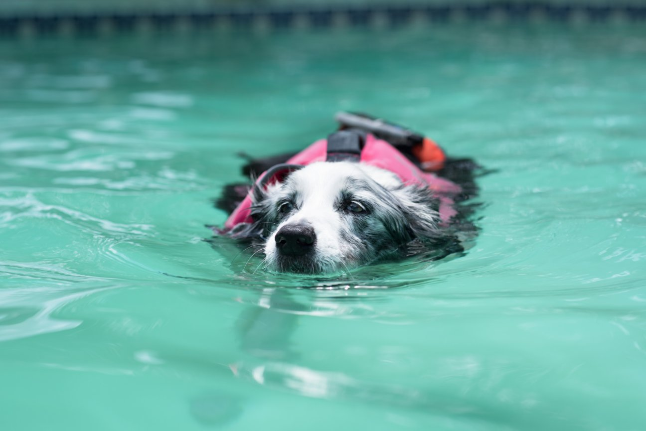 Dog Swimming & Water Therapy | Sassy Swimmers | Birmingham, AL